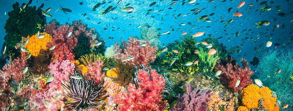 Colourful reef scene with fish